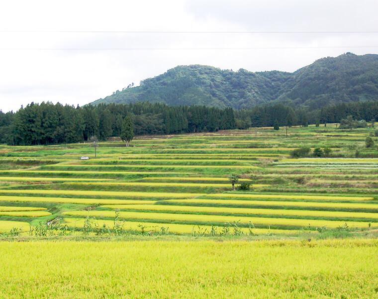 中島の棚田